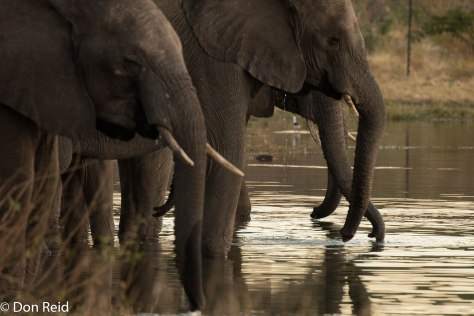 Elephants drinking, Kasane Water Treatment