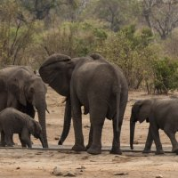 A Week in Olifants - getting there