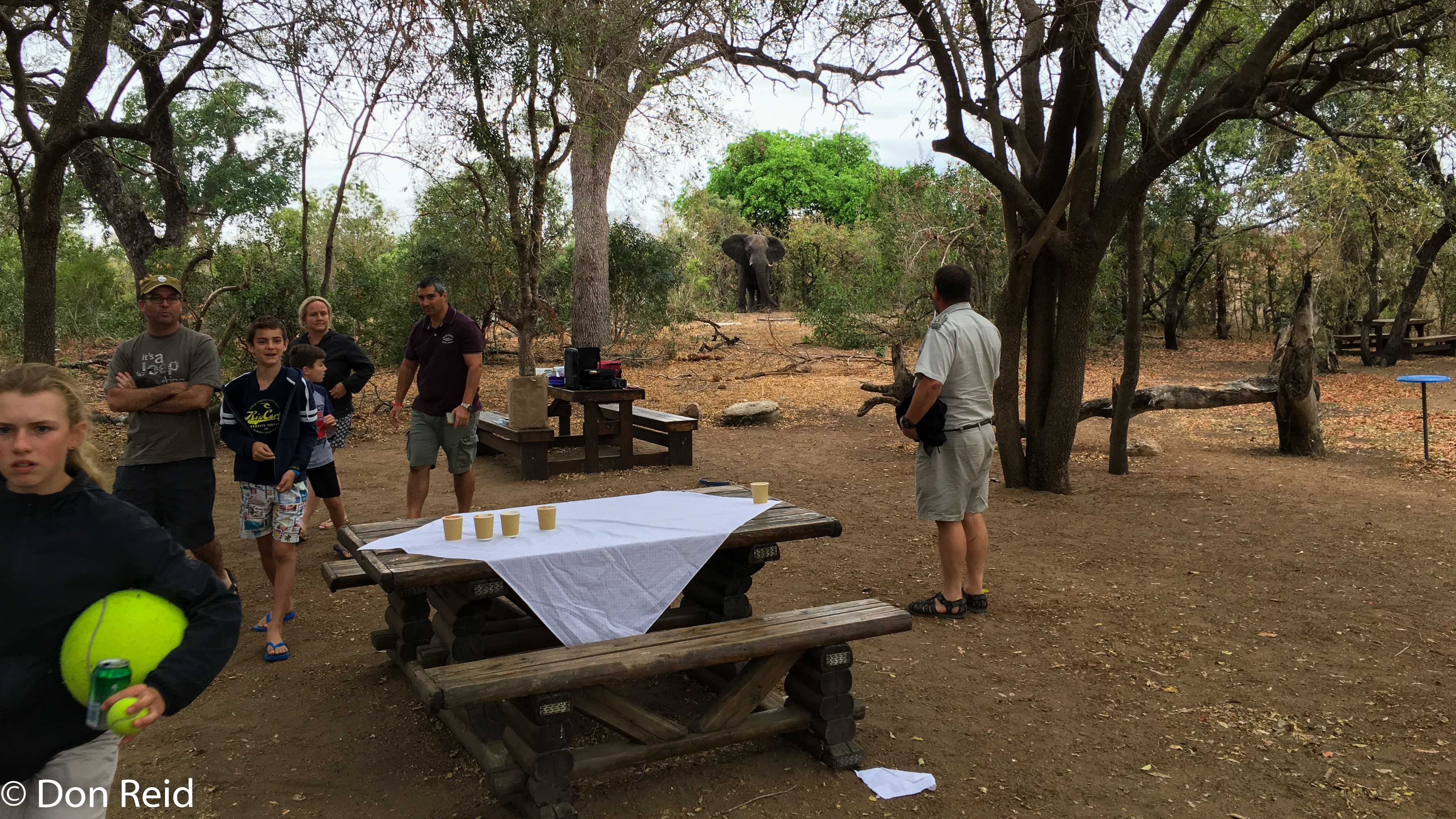 Afsaal picnic spot - Elephant nearby, KNP