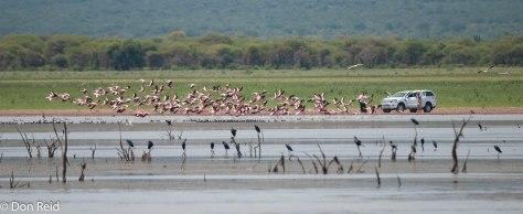 Flamingos, Mkhombo Dam