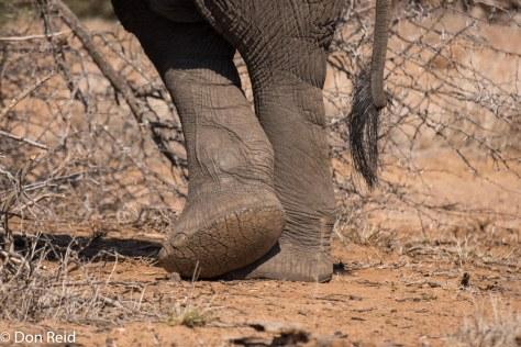 Elephant, KNP