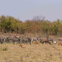A Week in Olifants - The Road to Mopani