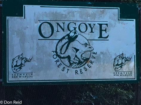 Ongoye Forest