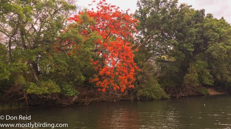 Chobe River trip