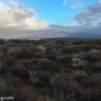Atlasing Tales - Little Karoo near Oudtshoorn