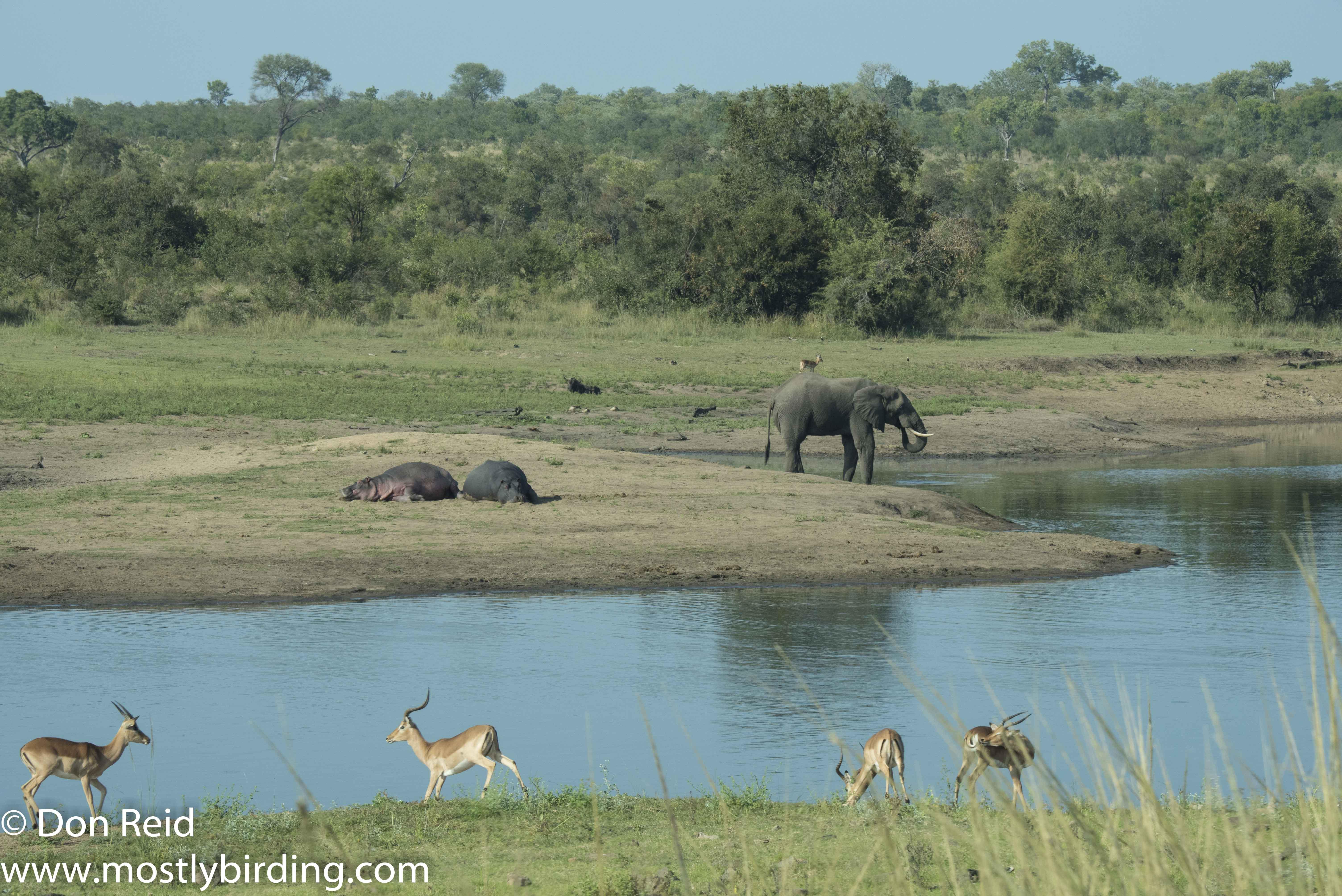 Kruger Day Visit