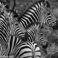 Kruger unplanned - The Journey