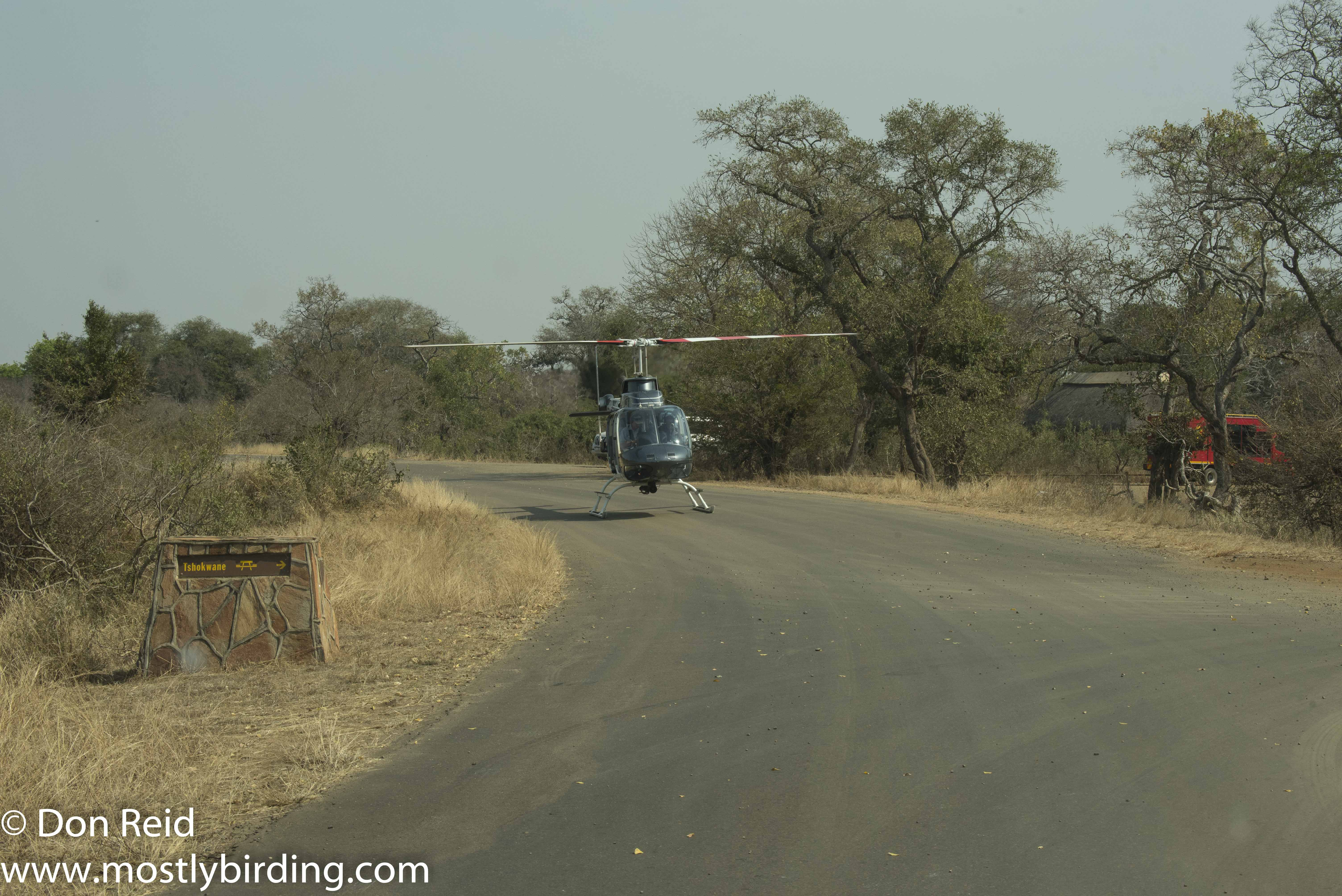 Whirly bird, Kruger Park