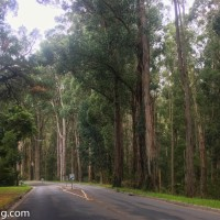 Australian Adventure - Victoria : Mount Dandenong